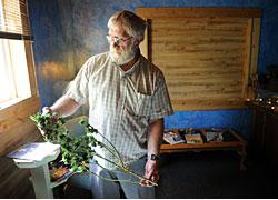 "Larry Hill — owner of the The Apothecary, 1314 Coffman St. — displays a medical marijuana plant Thursday that he has grown and harvested. Hill said he opened his medical marijuana dispensary in February and has ""over 50 patients."" Lewis Geyer/Times-Call"